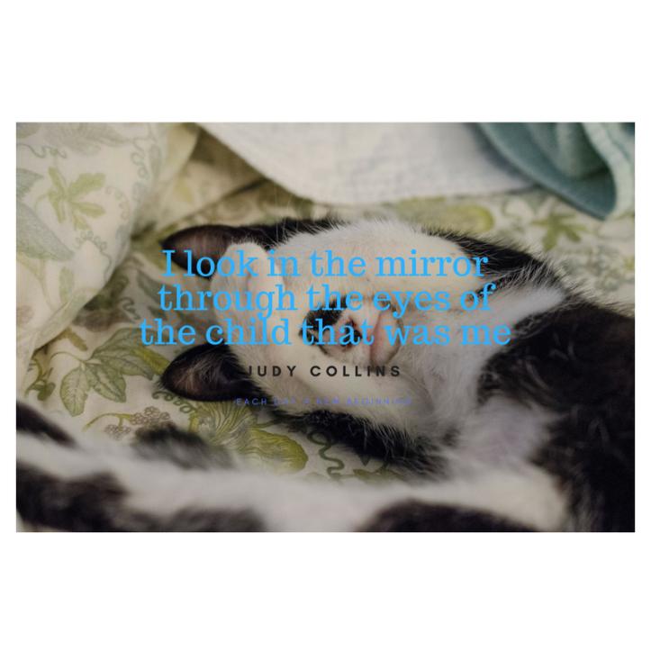 kitten photo (1)